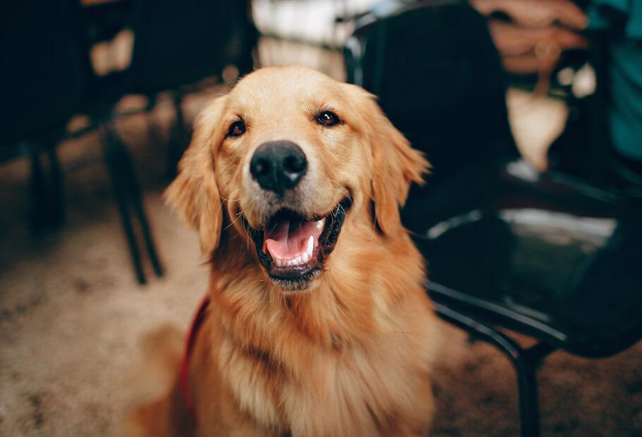 Wellness Exams – Canine