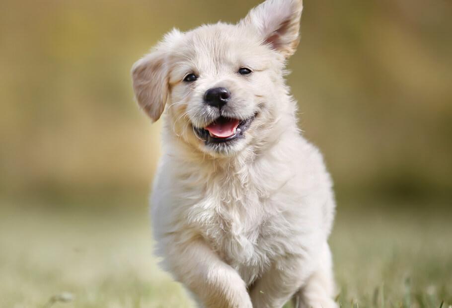 Wellness Exams – Puppy
